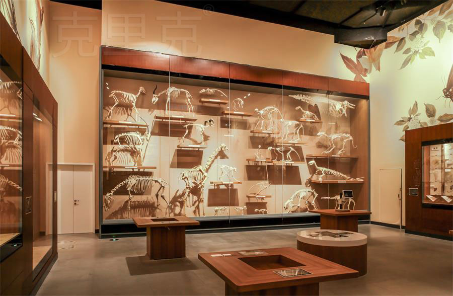博物馆高展柜尺寸设计标准